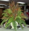 Where to rent FLORAL, FERN W  MULTI DRIED in White Oak TX